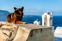 Santorini -Dog by the Bell Towers in  Oia