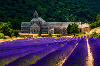 Vaucluse - Lavender Field in front of Sénanque Abbey